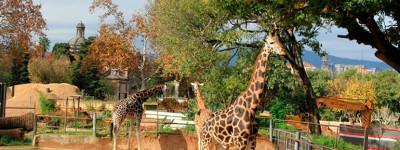 Лучший Барселонский зоопарк (Barcelona Zoo)