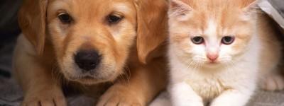Домашние животные в Испании получат «человеческий статус» благодаря революционному закону