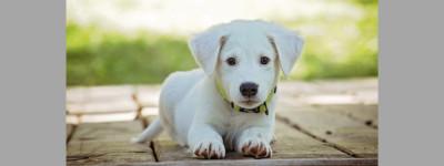 Испанские ученые разработали первый экспресс-тест на Covid для домашних животных