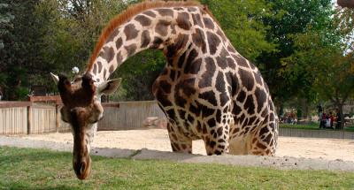 Лучший зоопарк и дельфинарий в Мадриде
