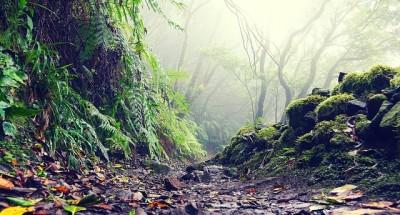 Реликтовый лес в парке Анага на Тенерифе
