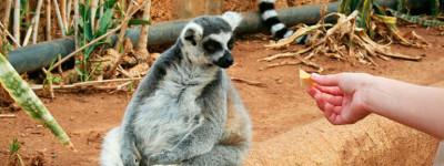 Зоосад Monkey Park (Парк обезьян) на Тенерифе