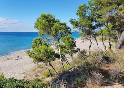 Сосны у пляжа Platja Del Torn
