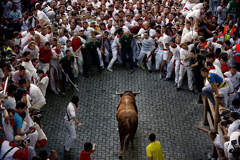 Животные на праздниках