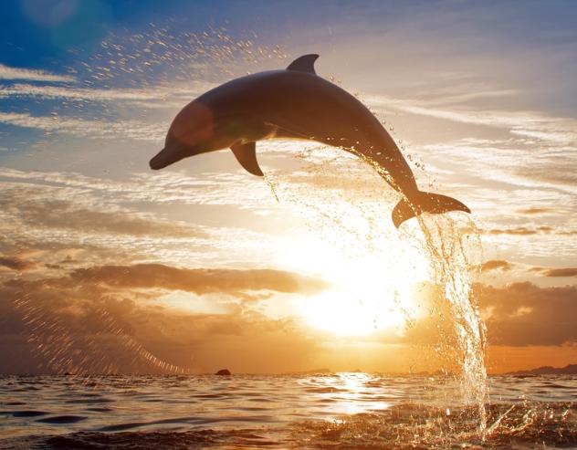когда лучше всего отправиться наблюдать за китами на тенерифе