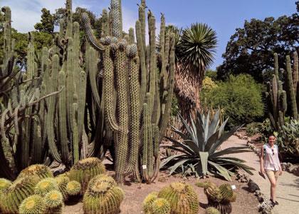 Кактусы в саду Jardin Botanico