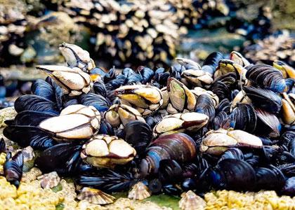 Моллюски на пляже Кафедральных Соборов