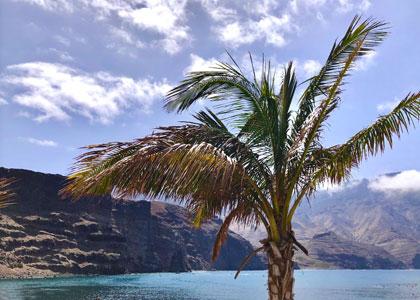 Пальмы на пляже Пуэрто-де-лас-Ньевес