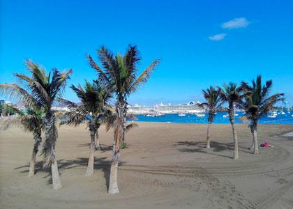 Пальмы на пляже лас Алькараванерас