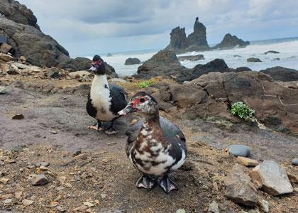 Птицы на пляже Бенихо