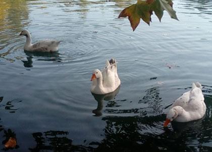Птицы в парке Albufera de Anna