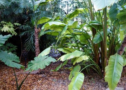Растения в саду Jardin Botanico