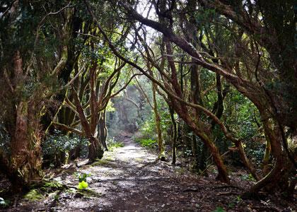 Реликтовые леса