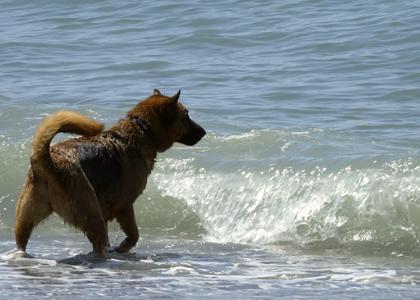 Собака купаеться в море