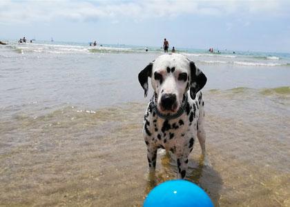 Собака на пляже Pinedo