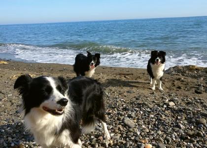 Три собаки на пляже
