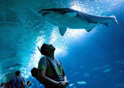акулы в парке океанографик валенсия