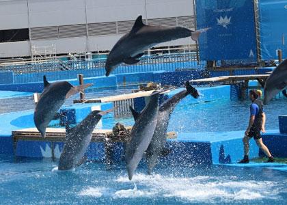 дельфины в парке океанографик валенсия