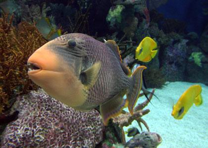 тропические рыбки в парке океанографик валенсия