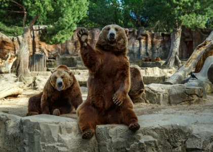 Медведи в зоопарке Мадрида