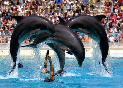 Прыжок дельфинов через людей