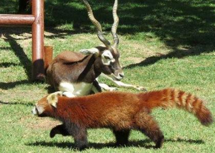 Животные в зоопарке Мадрида
