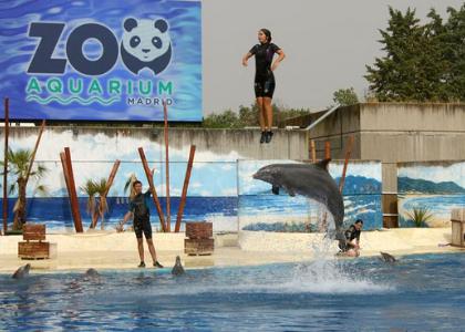 Дельфин подбросил девушку