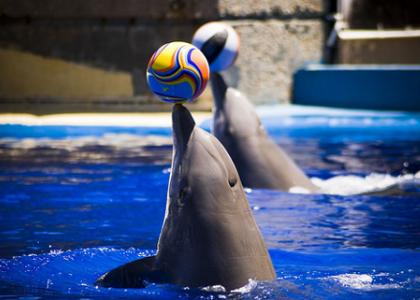 Дельфин и мячик