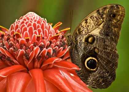 Бабочка в Бенальмаденском парке