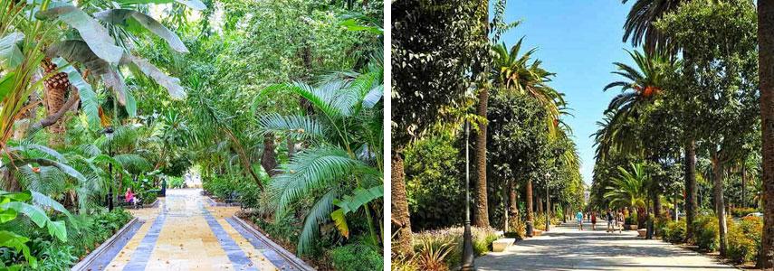 Ботанический сад Аламеда