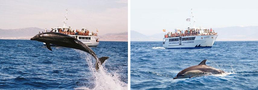 Дельфины в природе