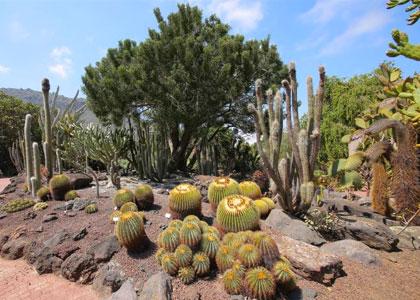 Кактусы в ботаническом саду La Concepcion