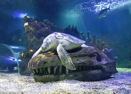 Морская черепаха в центре Sea Life