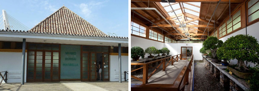 Museo del Bonsai в Марбелье