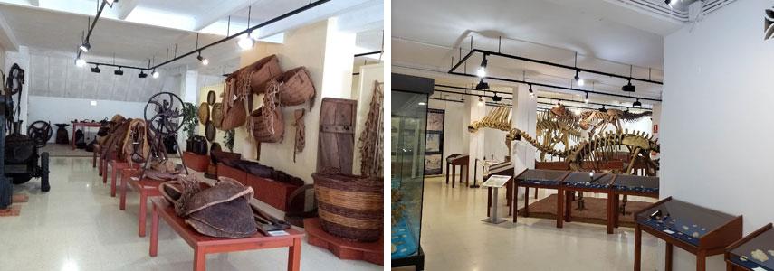 Museo de Paleontología