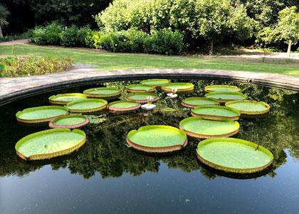 Растения в ботаническом саду La Concepcion