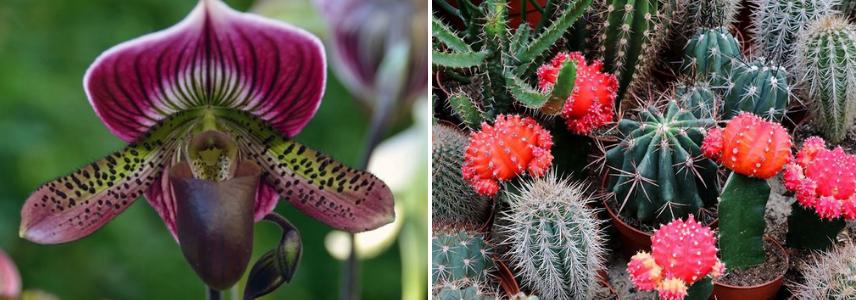 Редкие виды орхидей и кактусов