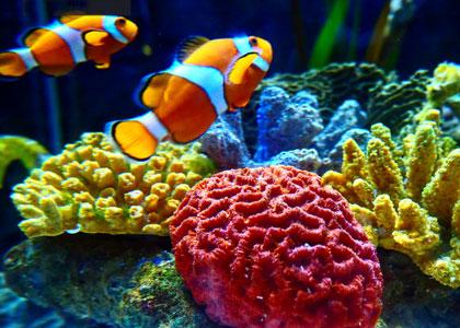 Рыбки в центре Sea Life