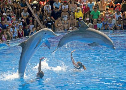 Шоу дельфинов Dofins