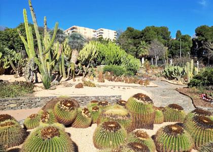 Сад кактусов в парке «Палома»