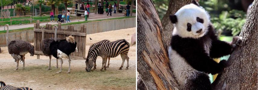 Сектора с животными, зоопарк зимой