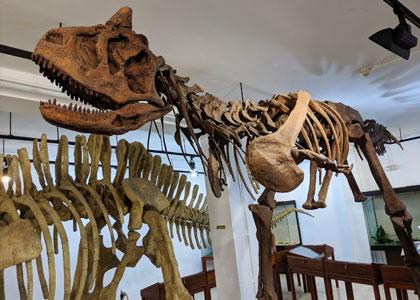Скелет динозавра в Палеонтологическом музее