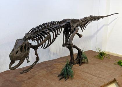 Скелет ящера в Палеонтологическом музее