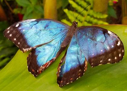 В Бенальмаденском парке бабочек