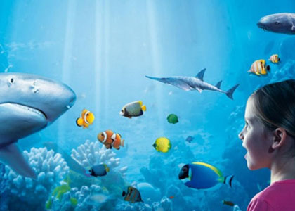 В центре Sea Life