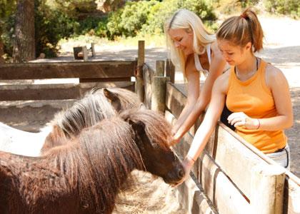 Пони в парке Галатцо