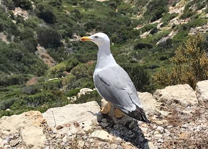 Птицы в заповеднике Са Драгонера