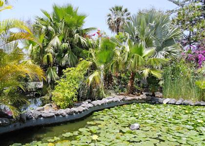 Ботанический сад в Пуэрто-де-ла-Крус