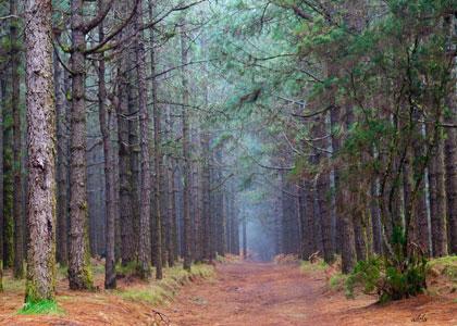 Дорожка в лесу Эсперанса
