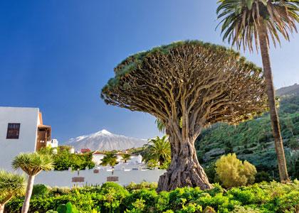 Драконово дерево в парке дикой природы